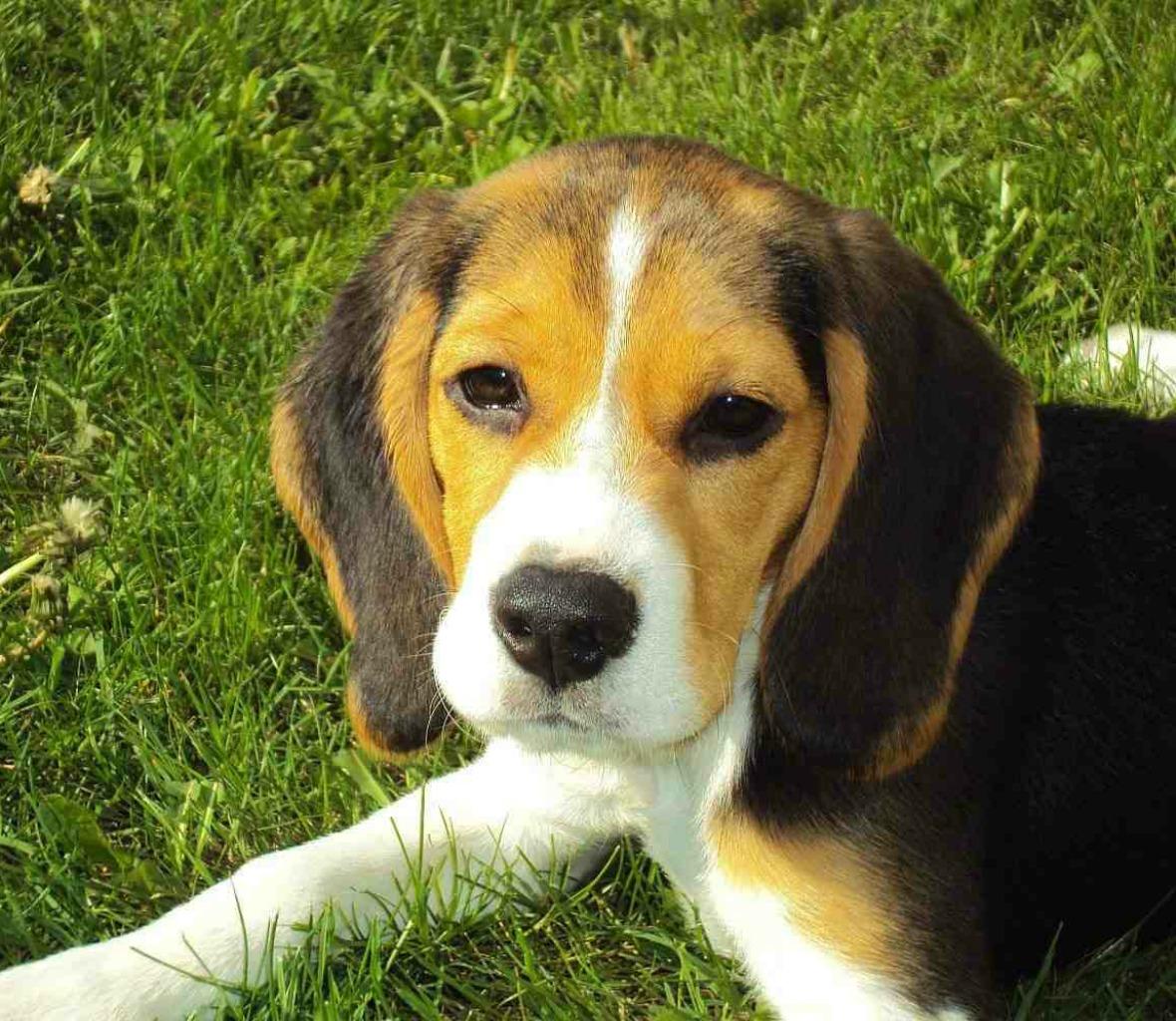hundebilder kostenlos